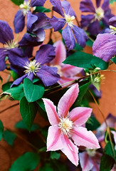 Some ... er ... flowers (mkk707) Tags: film leicaflexsl2 summicronr50mm kodakektar100 vintagelens vintagefilmcamera itsaleica leica flower bodensee bokeh