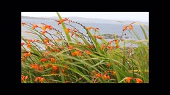 Can you hear the wind blow? (Seba.it) Tags: noaudio ireland connemara wildatlanticway wind irlanda galway