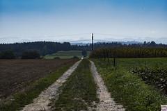 Weg weit weg (auschmid) Tags: auschmid leicam10 aposummicron75 kirchlindach herbst weg strasse felder natur berge panorama