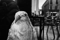 2018 (Luca * Rossi) Tags: lucaxrossi street streetphotography streetphoto streetbw streetphotoblackandwhite bird mantova