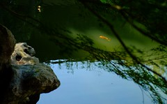 Koi (High Water Media) Tags: reflection pond koi fish swim underwater serene garden outdoors colorful
