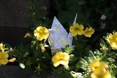 Paper Crane and Flower Bed (Eridanus 21) Tags: ツルと花壇の花 flower origami paper craneおりがみ 折り鶴 ツル 折り紙 花壇 bed 花 花写真 flowerphotoツル flowerbed papercrane おりがみ flowerphoto 花が好き origamiphoto
