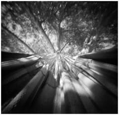 Hammock pinhole (Mark Dries) Tags: markguitarphoto markdries pinhole piglet pinholecamera 6x6 mediumformat ilfordfp4 r09 900 negativescan cyprus