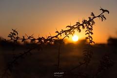 African sunset, Kalahari, Namibia (LENS.ART Photographie) Tags: namibia kalahari sundown dornen d7200 nikon sonnenuntergang savanne desert strauch zweig afrika africa