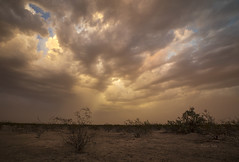 Stormy Tranquility (Ramen Saha) Tags: haboob clouds thunderstorm arizona ramensaha sandstorm