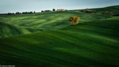 Albero Solitario (SDB79) Tags: colline molise ururi campagna campo grano agricoltura