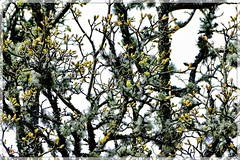Can You Spot Him?.. (Sean....) Tags: bird birds nature wildlfe tree trees lichen bud buds puzzle hiding camouflaged