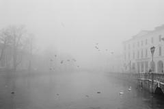 uccelli - birds (ma.ri_na) Tags: treviso inverno nebbia pellicola film nikonfm2 bn