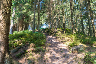 Durch den Schwarzwald
