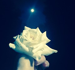 The moon is in charge (absolutelyultimate) Tags: petals me flower whiterose color night edited iphone7 moon summer