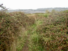 Sully Island u (Dugswell2) Tags: sullyisland p21 tidalisland wales siblet caton