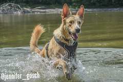 IMG_20180830_155721 (gosch_jennifer) Tags: dog dogs dogphotography swimmingwhitdogs mybestfriend happydog wander hiking hikingwhitdogs hund hunde hundefotografie schwimmenmithund wandern wanderlust wandernmithund vienna austria wien österreich