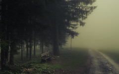 Waiting for the last bus to nowhere (Netsrak) Tags: at alpen alps baum berg bäume eu europa europe landschaft natur nebel wald fog landscape mist mountain nature woods