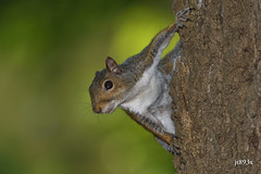 Squirrel (jt893x) Tags: 150600mm d500 jt893x nikon nikond500 rodent sigma sigma150600mmf563dgoshsms squirrel alittlebeauty coth thesunshinegroup coth5