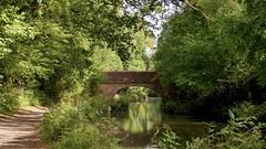 Along the towpath (Englepip) Tags: canal water towpath bridge greenery trees foliage brickwork