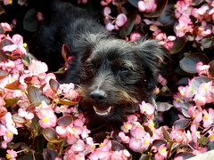 Happy Weekend (BrigitteE1) Tags: buddy buddylein mrb happyweekend dog hund blumen