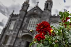 Church / Kilkenny / Ireland (Marc Wildenhof) Tags: flower flowers church kirche kilkenny irland ireland architektur architecture gebäude unscharf effekt canon canoneos6d