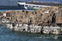 Oregon.7.14.18.1 (jrbeckwith) Tags: summer roadtrip 2018 jrbeckwith jbeckr family vacation oregon or wildlife coast pacificocean ocean beach sealioncave sea lion cave sealion cottagegrove