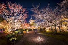 Not just any walk in the park... III (NOAC_) Tags: japan japanese travel tourism temple pagoda asia asian evening dusk late night nocturnal blue colors colorful autumn toji tōji buddhism buddhist kyoto park garden sky architecture tree rock building landscape grass
