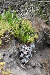 Bird Island & China Cove Trail (nick.amoscato) Tags: ca california pointlobos lobos reserve bigsur