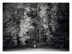 . (AnneStany) Tags: arbre tree banc bench blackwhite noirblanc under dessous