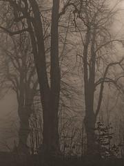 Belledonne, 2017 (Olivier BERTRAND) Tags: vercors belledonne blackandwhite blackandwhitephotography digitalphotography neige forest forêt hiver isère landscape lumix25mm lumix noiretblanc nature naturallight olivierbertrand olympusem5markii winter woods hybridcamera 25mm panasoniclumix25mm