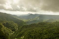 Rainforest - Mauritius (Janis Engel) Tags: sonyflickraward sony a7rii a7 alpha 7 ilce7rm2 sel1635gm