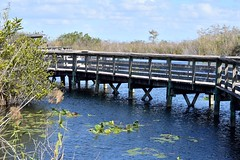 Walkway On The Anhinga Trail (ACEZandEIGHTZ) Tags: boardwalk nature trail anhinga everglades national park florida nikon d3200 water sky wooden