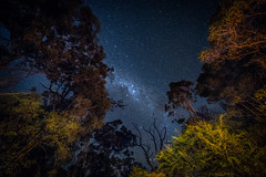counting stars (Rafael Zenon Wagner) Tags: sterne himmel nacht bäume australia nikon d810 laowa12mmf28zerod stars sky night trees