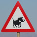 Warthog Warniing road sign, Limpopo, South Africa