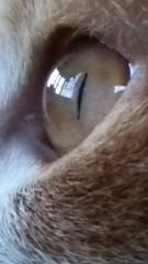 1月末の橙 (何時の橙) Tags: 目 キャッツアイ ねこ ネコ 猫 橙 今日の橙