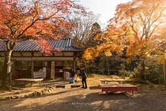 Kyoto in Autumn. (bgfotologue) Tags: photo landscape 風光 leaves 2017 攝影 travel 紅葉 park bgphoto 風景 autumn 京都 foliage redleaves image tourist 楓葉 temple 秋 bellphoto photography imaging momiji maples tumblr 500px 名勝 日本 寺廟 shrine japan kyoto