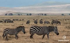 Ngorongoro Crater (www.jamesbrew.com) (James Brew (www.jamesbrew.com)) Tags: tanzania africa eastafrica safari ngorongoro crater landscape landscapephotography wildlife wildlifephotography travel travelphotography jamesbrew
