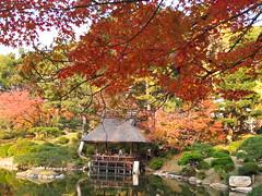 a (61) (hiromi89) Tags: japan beauty beautiful scenery flower wood pond