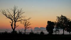 A new dawn (Cajofavi) Tags: landscape dawn sky mist tree sunrise öland sweden siluett silhouette färjestaden