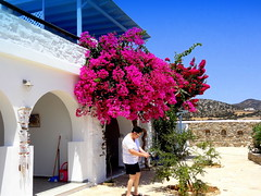 Ergina Summer Resort. Making Picture of a Pomegranate Tree (dimaruss34) Tags: newyork brooklyn dmitriyfomenko image sky greece antiparos mountains erginasummerresort flowers house woman shed