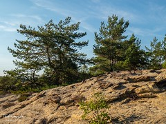 Conifers on the Rock (Stefan Beckhusen) Tags: harzmountainrange harz conifer coniferoustrees rock mountain nature landscape sunny day color sky