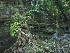 Nella forra (torrente Catenaccio) (Marco Scataglini) Tags: tuscia forra geologia italia torrente gola