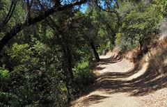 On Upper Wildcat Canyon Trail (LeftCoastKenny) Tags: ranchosanantonio trees brush grass trail mountain