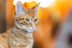 Javacatscafe08Sep20180425.jpg (fredstrobel) Tags: javacafecats javacatscafe atlanta places animals ga pets cats usa georgia unitedstates us