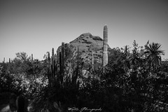12031 (Joshua Wells Photography) Tags: canon desert cactus cacti canoncamera t4i canont4i 5d teamcanon landscape mountains mountain arizona az photography canonlens scottsdale