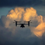 Osprey and Cloud thumbnail