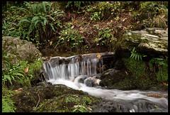 Stream and Ferns (zweiblumen) Tags: stream ferns woodland tanybwlch gwynedd wales cymru uk canoneos50d polariser canonspeedlite430exii zweiblumen