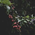 Late summer flora thumbnail