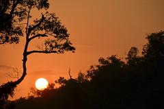 Sunset in the jungle of Borneo (josepsalabarbany) Tags: borneo kalimantan indonesia jungle wildlife monkey orangutan proboscismonkey nasalislarvatus tanjungputing river riu nationalpark boat klotok barca sunset