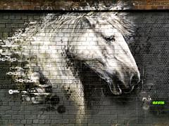 Shooting Horses by Affix (Waving lights in the dark) Tags: huawei p20pro raw dng walkabout horse horses graff graffiti sheffield 40mp affix spraycan spraypaint wall brick brickwork urbex urban urbanart city street equine