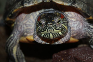 Turtle Greetings