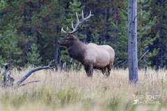 He's Huge (TylerSchlittPhotography) Tags: photography canon art travel love landscape nationalparks sd mt wy co mo flickr september sky nature exploring discover amazing