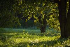 16.09.2018 (Kosmi88) Tags: poland sun sunset nature nikon głowno polska tree green brige most woda jezioro lake las