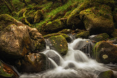 Babbling Brook (Rich Walker75) Tags: river rivers water woodland woods wood devon dartmoor landscapes landscapephotography outdoor nature riverplym canon england efs1585mmisusm eos eos80d longexposure longexposures longexposurephotography